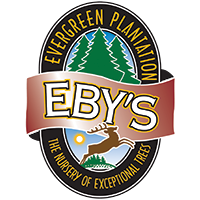 Eby's Evergrteen Plantation |Bristol, IN |