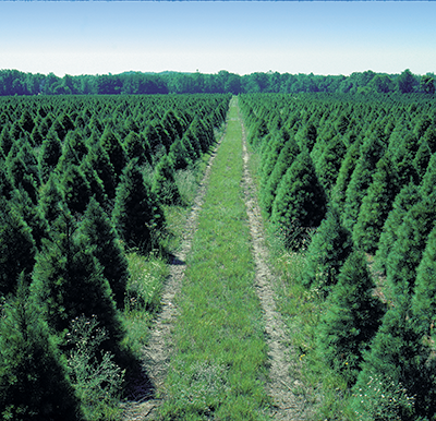 About Eby's | Eby's Evergreen Plantation | Bristol, IN |